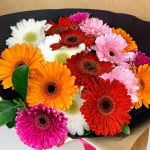 Glowing Gerberas 03
