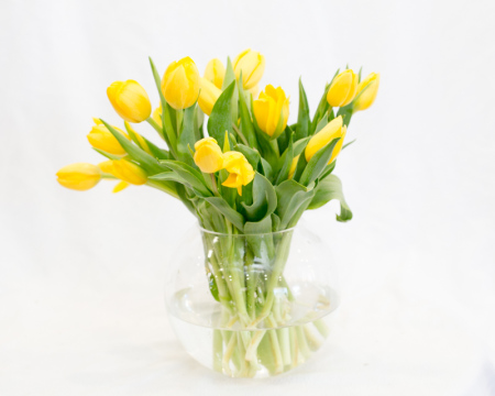 Yellow tulips in a glass vase